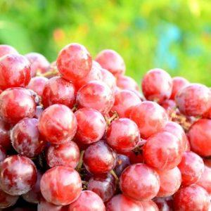 Grapes May Protect Eye Health